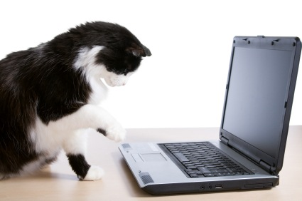 Cat uses a laptop
